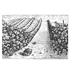 Vintage engraved hand drawn vineyards landscape vector