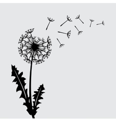 Blow dandelion background vector