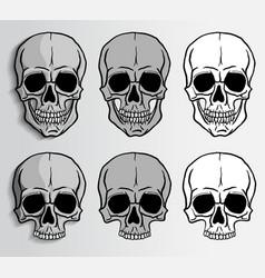 human skulls set vector image