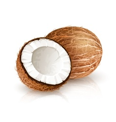 Coconut tropical nut fruit with cut vector image