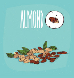 set of isolated plant almond nuts herb vector image vector image