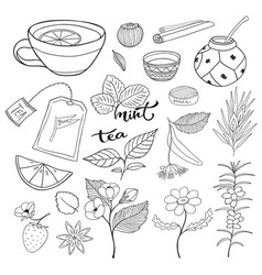 Tea hand drawn isolated collection herbal vector