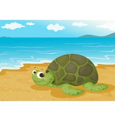 Tortoise on sea shore vector