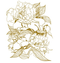 drawing peonies bouquet vector image