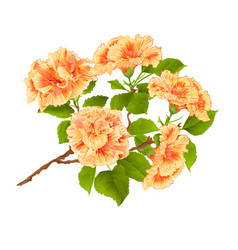 Branch yelow hibiscus tropical flowers vector