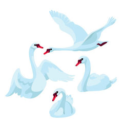 Swans on white background vector image vector image