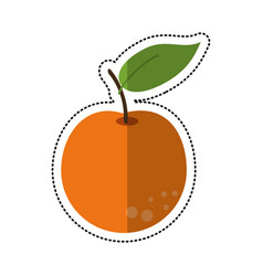 cartoon orange citrus fruit icon vector image vector image