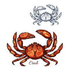 Crab isolated sketch icon vector