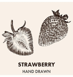 Sketch strawberry hand drawn fruit collection vector