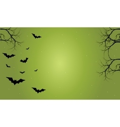 Halloween bat with green backgrounds vector