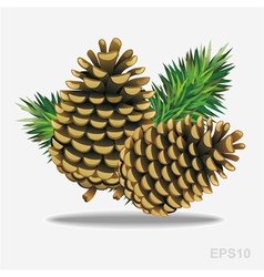 Pine cones with pine needles vector