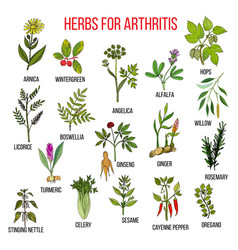 Herbs to fight arthritis boswellia willow celery vector
