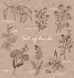 Set of isolated herbs on old background vector