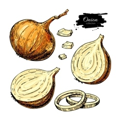 Onion hand drawn set full rings and half vector