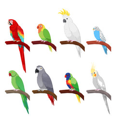 Tropical parrot set isolated on white background vector
