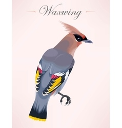 Cedar waxwing vector image vector image