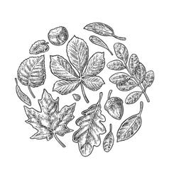 Set leaf vintage engraved vector image