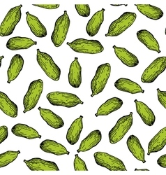 Cardamom hand drawn seamless pattern vector