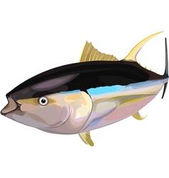 tuna6 vector image vector image