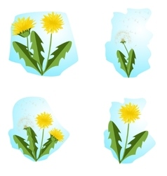 Dandelions set with leaves vector
