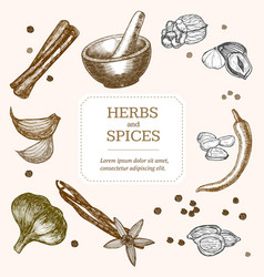 Spices banner card hand draw sketch vector