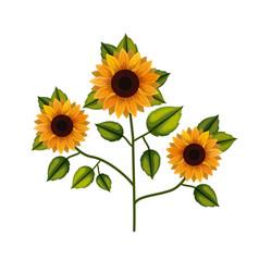 Sunflower plant in white background vector