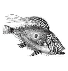 John Dory vintage engraving vector image vector image