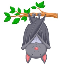 Cartoon bat sleeping vector