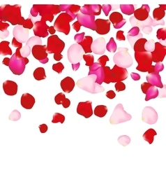 Red and pink rose petals isolated on white vector