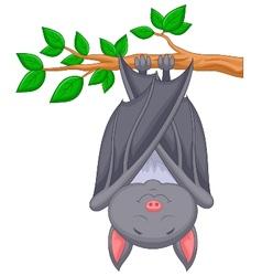 Cartoon bat sleeping vector image