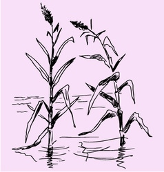 Reeds pond vector