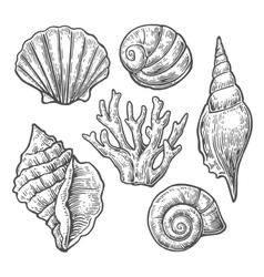 Sea shell set black engraving vintage vector
