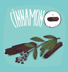 Set of isolated plant cinnamon sticks herb vector
