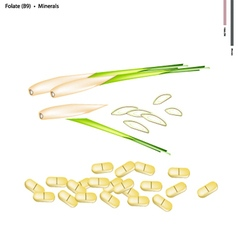 Lemon grass with vitamin b9 and minerals vector
