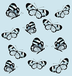 Pattern with butterfly with transparent wings vector