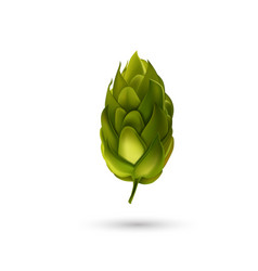 Young fir cone bud isolated on white background vector