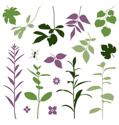 Set of silhouettes of summer plants vector image