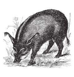 Warthog vintage engraving vector