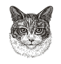 Drawn portrait of cute cat animal kitty pet vector