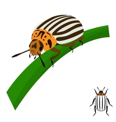 Colorado potato beetle sits on a stalk vector