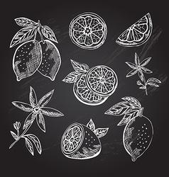 Hand drawn lemon fruits vector