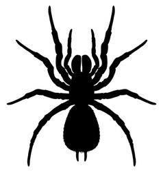 Silhouette spider vector