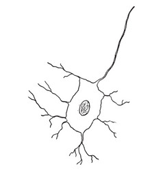 Nerve cell vintage vector