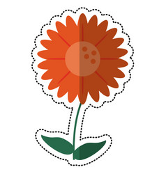 cartoon gerbera flower natural vector image