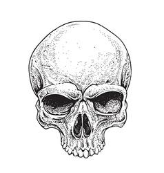 Dotwork skull vector