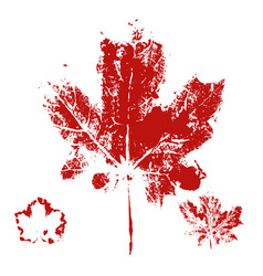 maple leaf print vector image