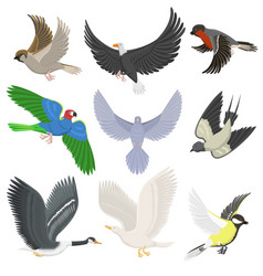 Set of different wing wild flying birds cartoon vector