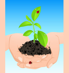 Young green plant in hands vector