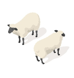 Isometric 3d of sheep vector image