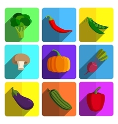 Colorful Vegetable Icon Set on Bright Background vector image vector image